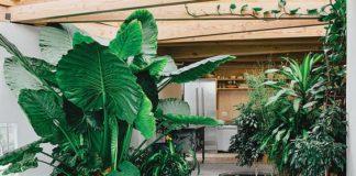 ไอเดียแต่งสวนในบ้าน, ปลูกต้นไม้, พื้นที่สีเขียว