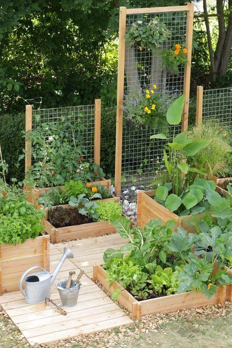 แปลงปลูกผัก ,สวนผัก
